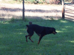 Running through the yard