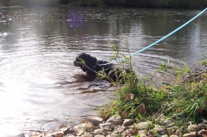 Taking a dip in the creek