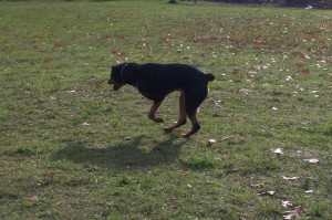 Running at the park