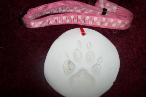 The paw print Shilo's vet took.... Thank you Cottage Grove Vet Clinic and Dr. Pleacia!!